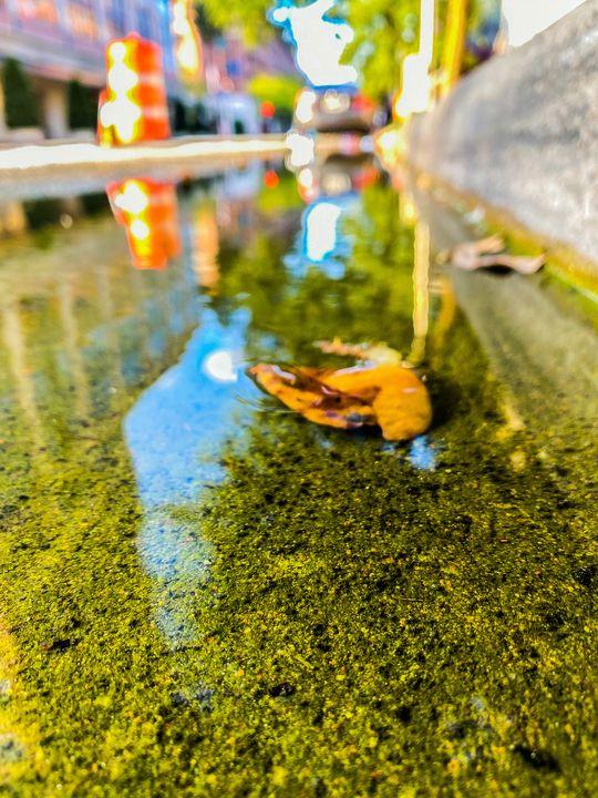 Leaf in the city - BlazingBlu Arts & Photography