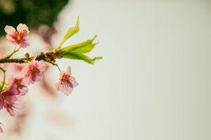 Flower_Spring