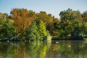 Lake and Swan