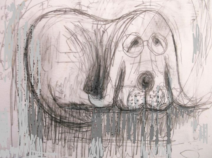 middle aged dog - woz