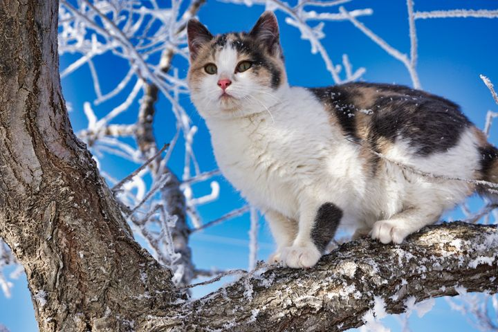 Frosty Kitty - Sky North Photography