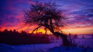 The Apple Tree at Sunrise