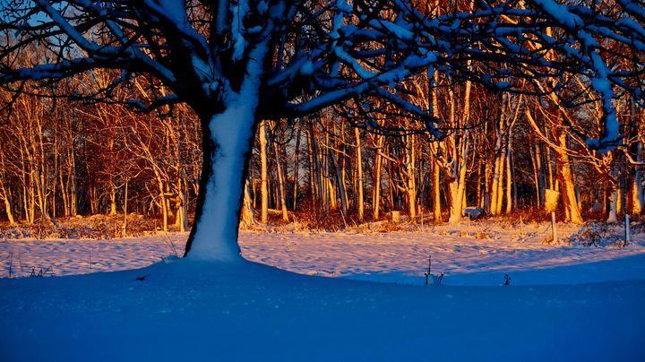 Wintertime Tree - Sky North Photography