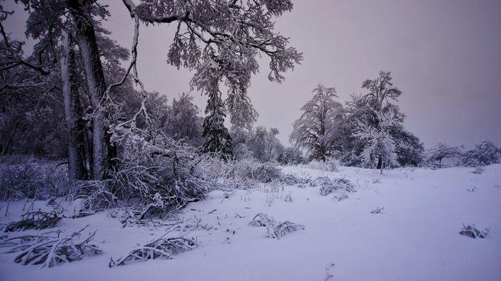 Winter's Hidden Beauty - Sky North Photography