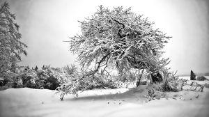Apple Tree in B&W