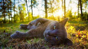 Feline Boudoir