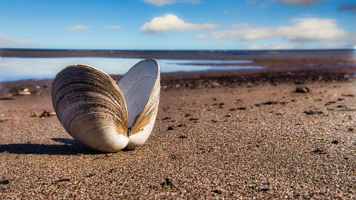 Clam Beach - Sky North Photography