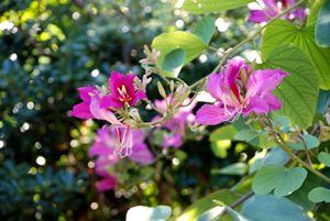 Under Shade Flower