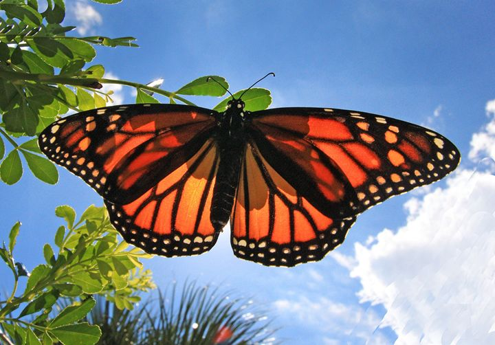 Butterfly #2 - Larry Singer Fine Art Photography