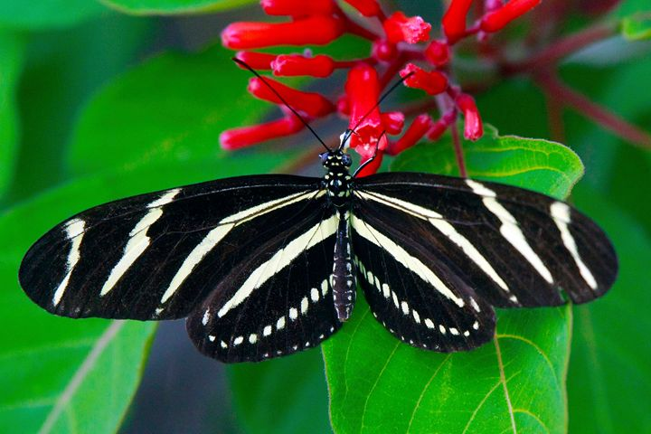 Butterfly #4 - Larry Singer Fine Art Photography