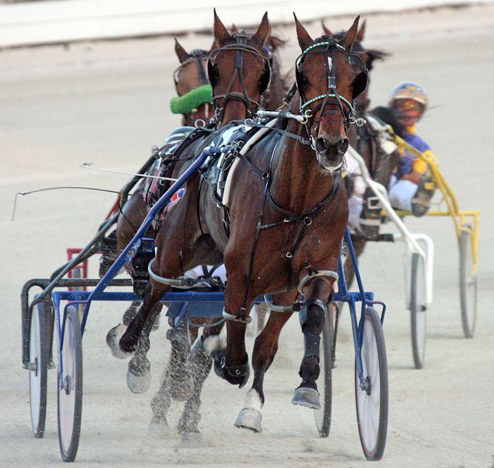 Harness Racing #1 - Larry Singer Fine Art Photography