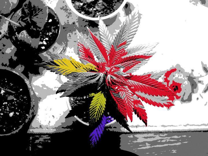 Colorful Medicine - The Farming Artist
