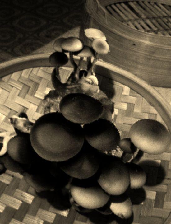 Psilocybe in Black & White - The Farming Artist
