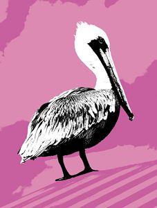 Pelican in Pink