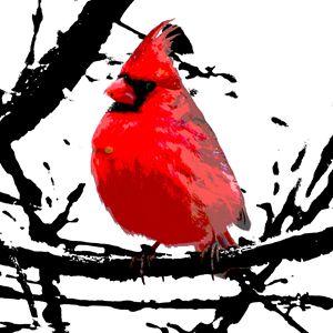 Cardinal in Winter - Vanessa Ray
