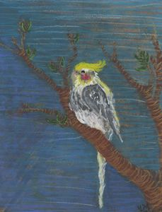 Pepito the Cockatiel