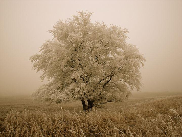 Winters Grace - The Blushing Artist