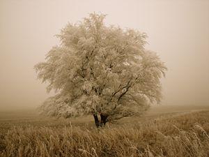 Winters Grace