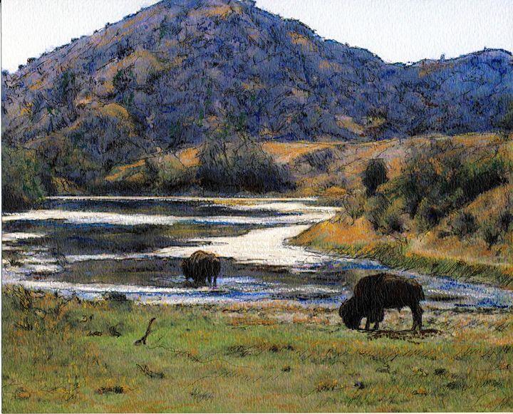 Catalina Buffalo - Randy Sprout Fine Art