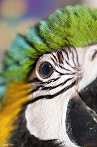 Birds Eye By Daniel Stein