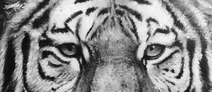 Tiger Mono