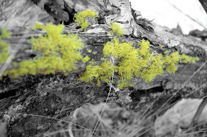 Lichen that log - David K. McMillin