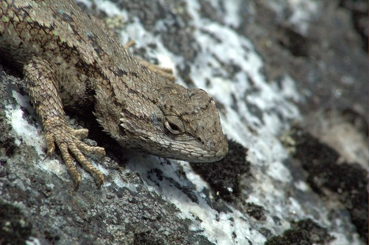 Lizard Rock - David K. McMillin