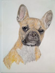 French bulldogs the
