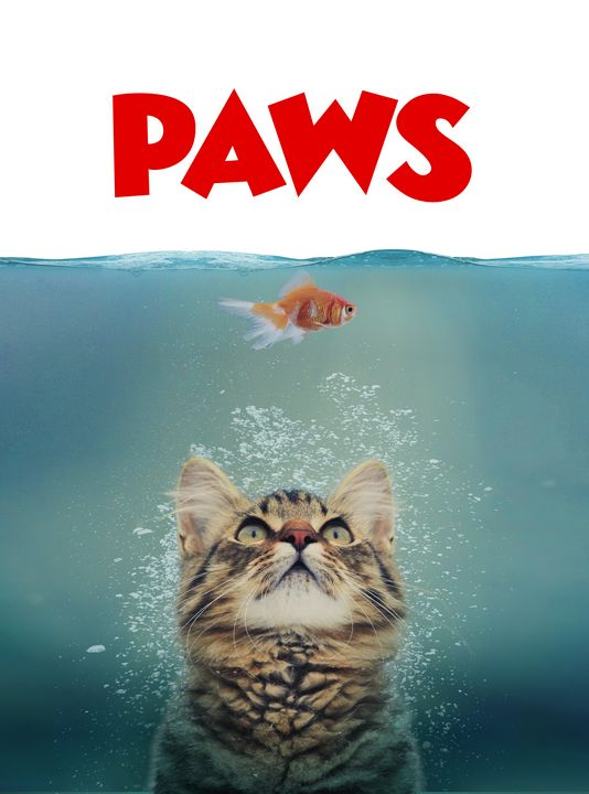 Beware of PAWS - The Graphic Guru
