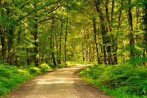 Valencay Woods
