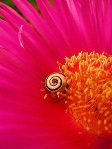 The Snail and the flower