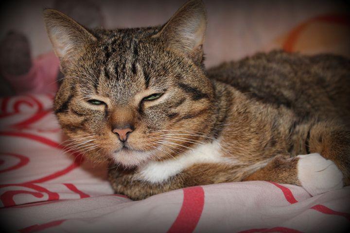 cat - Nature