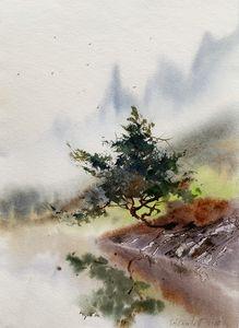 Pine at the lake