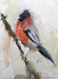 Bullfinch (small bird)