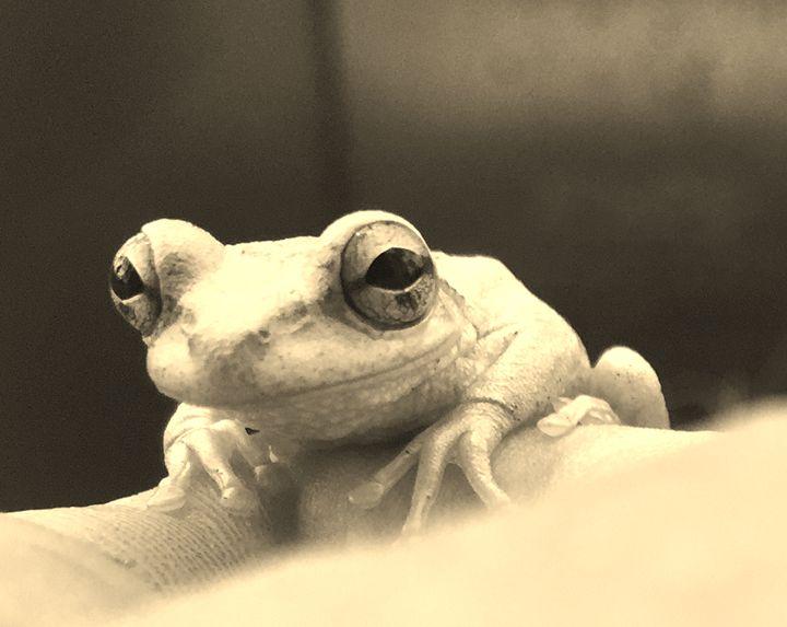 Chilling Frog 2 - Peanut Gallery