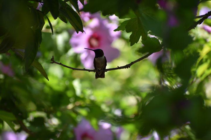 Hibiscus Visitor - Nature Pop