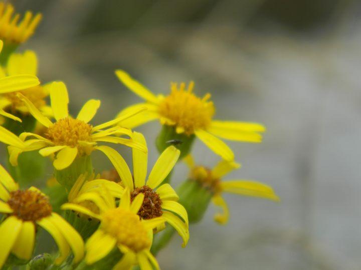 Bright in bloom - Becca Scott Photography