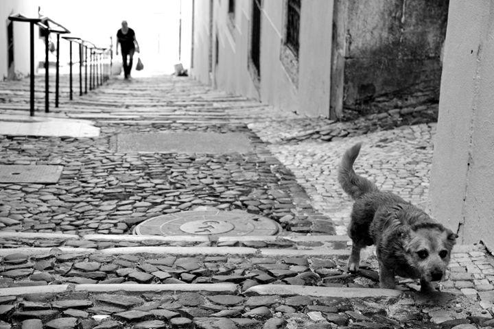 Old dog - Leandro Guardado