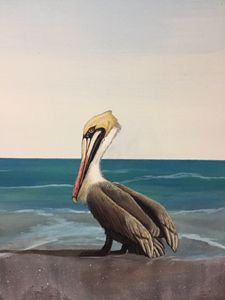 Pelican - Calby's Art