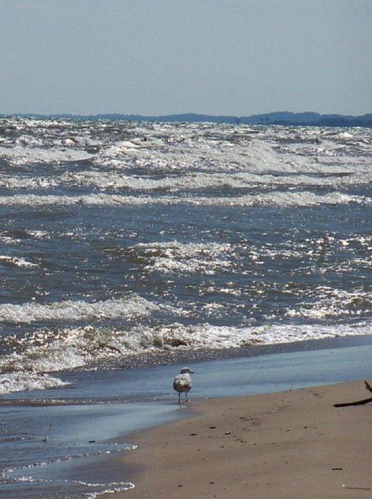 Beach, Waves, and Seagulls 3 - MCR Kreationz Photography