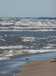 Beach, Waves, and Seagulls 3