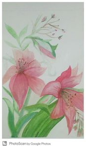 Pink lilly watercolor