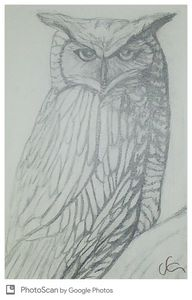 Horned owl in pencil