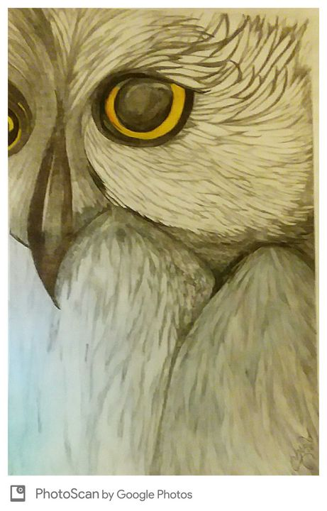 Owl is ok - Ccrider art