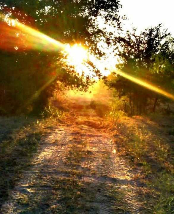 Sunny Path - McCann Gallery
