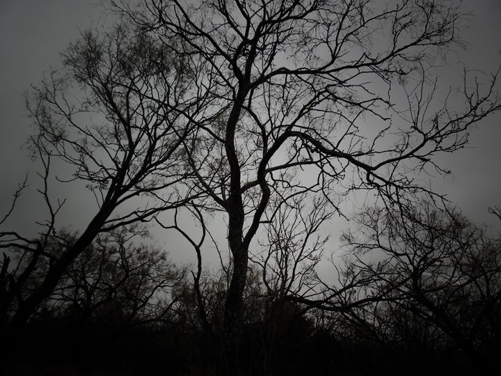 Winter Trees - McCann Gallery