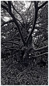 Something About the Tree Photograph