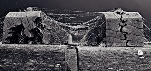 Wood n Webs photo