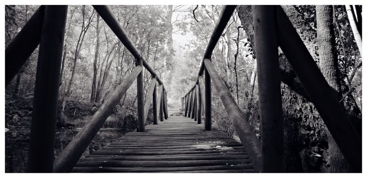 Path in the Forest - Omni Photo Art