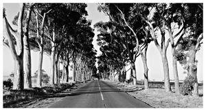 Mono Tree Cruising B&W Fine Art